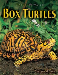 Cover of Box Turtles