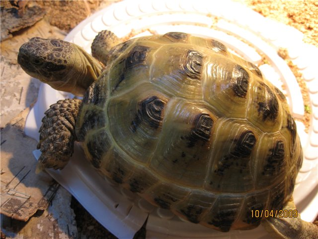 Как размножать черепах в домашних условиях 528