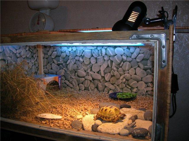Как сделать террариум для ящерицы