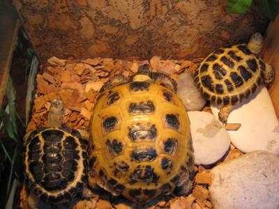 Разведение черепах